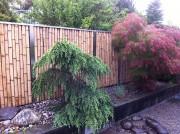 Sichtschutz und Gartenzaun Bambus