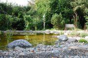 Wassergarten Gartenteich Bern