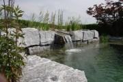Wassergarten Schwimmteich Bern II