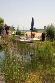 Wassergarten Schwimmteich Insel