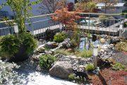 Wassergarten Teich Dachterrasse