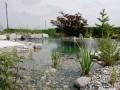 Wassergarten Schwimmteich Bern I