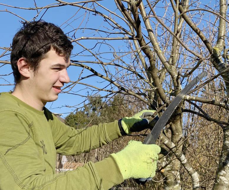 Winterschnitt – Schneiden Sie Ihre Bäume und Sträucher zurück
