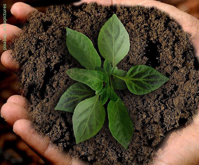 Organische Dünger für biologisch aktiven und fruchtbaren Boden