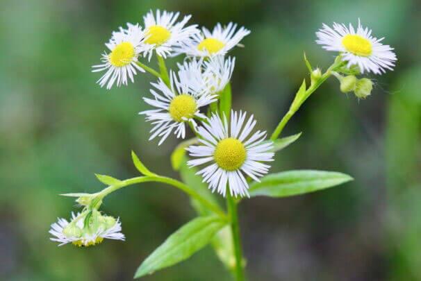 Biodiversität in Gefahr durch Neophyten